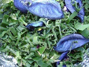 Potpourri: pandanus and blue  rose petals
