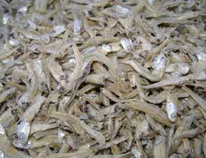 Dried Ikan Bilis