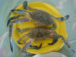 fresh sea crabs