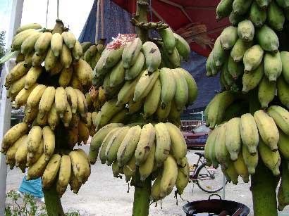 pisang abu