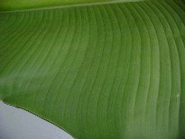 Outside of banana leaf