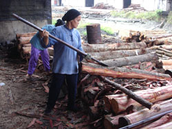 charcoal production in Kuala Sepetang